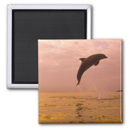 Bottlenose Dolphins (Tursiops truncatus) 2 Magnet