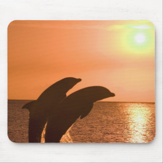 Bottlenose Dolphins Tursiops truncatus) 2 Mouse Pad