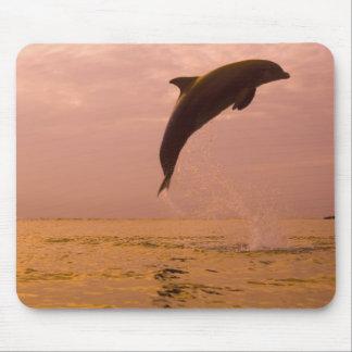 Bottlenose Dolphins (Tursiops truncatus) 2 Mousepad
