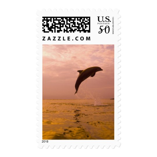 Bottlenose Dolphins (Tursiops truncatus) 2 Postage