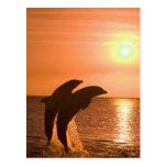 Bottlenose Dolphins Tursiops truncatus) 2 Post Cards