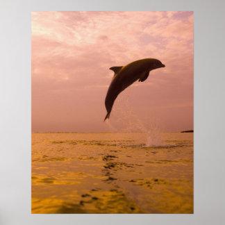 Bottlenose Dolphins (Tursiops truncatus) 2 Print