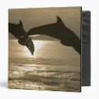 Bottlenose Dolphins Tursiops truncatus) 30 3 Ring Binder