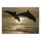 Bottlenose Dolphins Tursiops truncatus) 30 Card