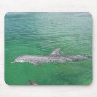 Bottlenose Dolphins Tursiops truncatus) 3 Mouse Pad