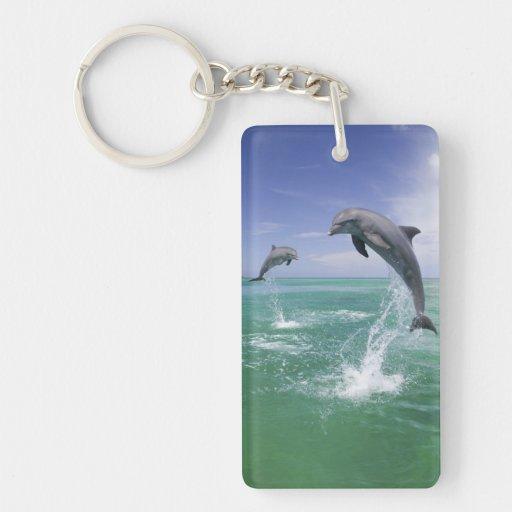 Bottlenose Dolphins Tursiops truncatus) 4 Rectangular Acrylic Key Chain