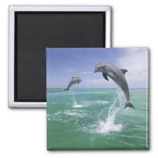 Bottlenose Dolphins Tursiops truncatus 4 Refrigerator Magnets
