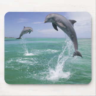 Bottlenose Dolphins Tursiops truncatus) 4 Mouse Pad