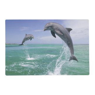 Bottlenose Dolphins Tursiops truncatus) 4 Laminated Place Mat