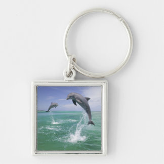 Bottlenose Dolphins Tursiops truncatus) 4 Silver-Colored Square Keychain