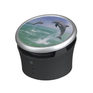 Bottlenose Dolphins Tursiops truncatus) 4 Speaker