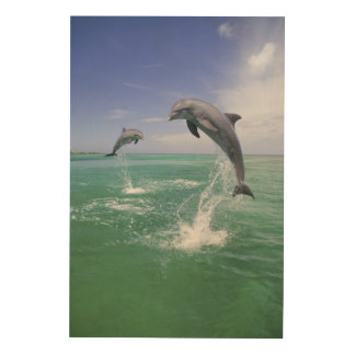 Bottlenose Dolphins Tursiops truncatus) 4 Wood Wall Art