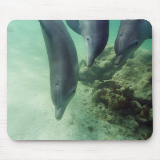 Bottlenose Dolphins Tursiops truncatus) 5 Mouse Pad
