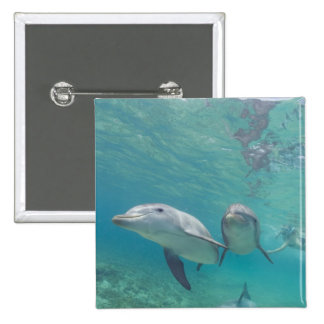 Bottlenose Dolphins Tursiops truncatus) 6 Pinback Buttons