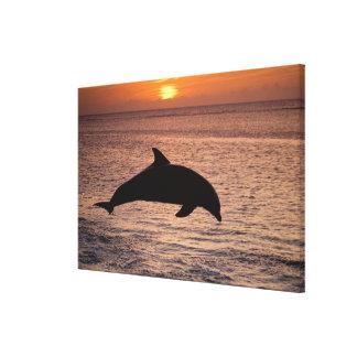 Bottlenose Dolphins Tursiops truncatus) 6 Canvas Print