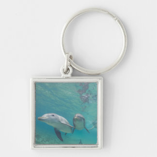 Bottlenose Dolphins Tursiops truncatus) 6 Silver-Colored Square Keychain