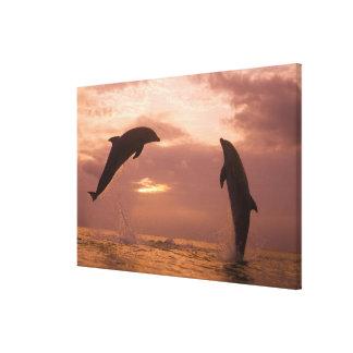 Bottlenose Dolphins Tursiops truncatus) 7 Canvas Print