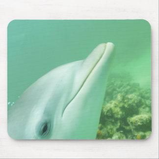 Bottlenose Dolphins Tursiops truncatus) 7 Mouse Pad