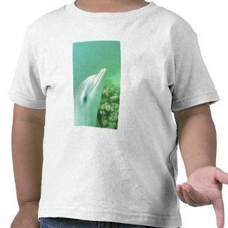 Bottlenose Dolphins Tursiops truncatus) 7 T Shirts