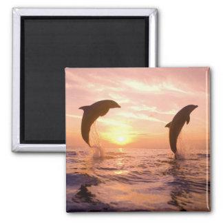 Bottlenose Dolphins Tursiops truncatus 8 Magnet