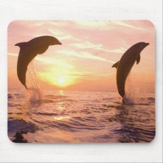 Bottlenose Dolphins Tursiops truncatus) 8 Mousepad