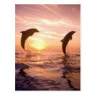 Bottlenose Dolphins Tursiops truncatus) 8 Postcard