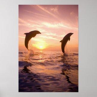 Bottlenose Dolphins Tursiops truncatus) 8 Poster