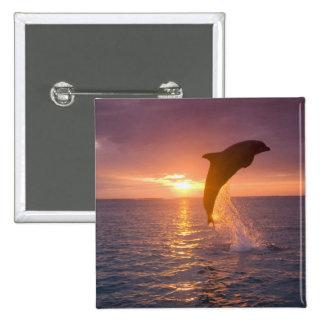 Bottlenose Dolphins Tursiops truncatus) 9 2 Inch Square Button