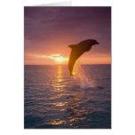 Bottlenose Dolphins Tursiops truncatus) 9 Card