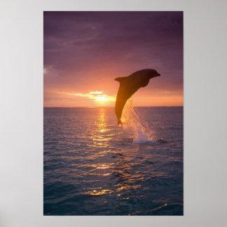 Bottlenose Dolphins Tursiops truncatus) 9 Posters