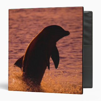 Bottlenose Dolphins Tursiops truncatus) 3 Ring Binder