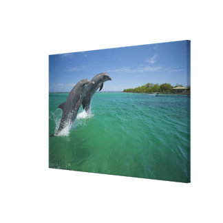 Bottlenose Dolphins (Tursiops truncatus) Canvas Print