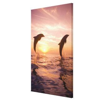 Bottlenose Dolphins Tursiops truncatus) Canvas Print