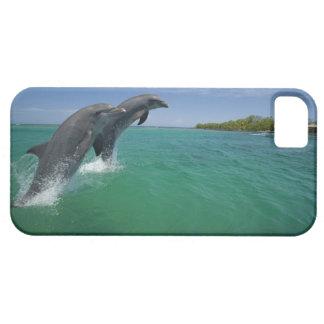 Bottlenose Dolphins (Tursiops truncatus) iPhone 5 Covers