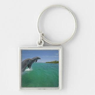 Bottlenose Dolphins (Tursiops truncatus) Keychain