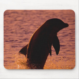 Bottlenose Dolphins Tursiops truncatus) Mouse Pad