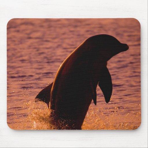Bottlenose Dolphins Tursiops truncatus) Mouse Pad