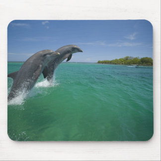 Bottlenose Dolphins (Tursiops truncatus) Mouse Pad