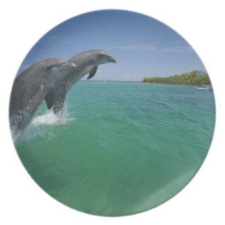 Bottlenose Dolphins (Tursiops truncatus) Party Plates