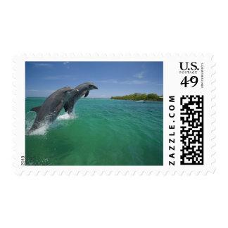 Bottlenose Dolphins (Tursiops truncatus) Postage
