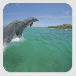 Bottlenose Dolphins (Tursiops truncatus) Square Stickers