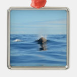 Bottlenose Whale Christmas Tree Ornaments