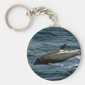 Bottlenose whale keychain