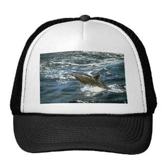 Bottlenose whale trucker hat