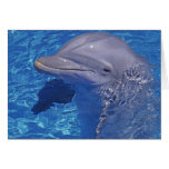 Bottlenosed Dolphin, Tursiops Truncatus Cards
