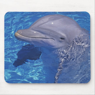 Bottlenosed Dolphin, Tursiops Truncatus Mouse Pad