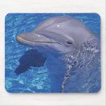 Bottlenosed Dolphin, Tursiops Truncatus Mousepads