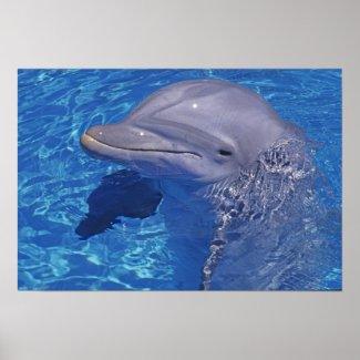 Bottlenosed Dolphin, Tursiops Truncatus Print