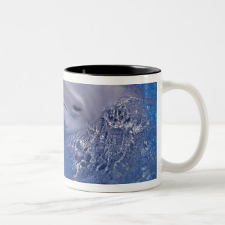 Bottlenosed Dolphin, Tursiops Truncatus Two-Tone Coffee Mug