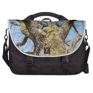 Bottom view oak tree without leaves in winter bags for laptop